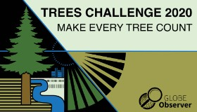 Trees Challenge 2020: Make Every Tree Count