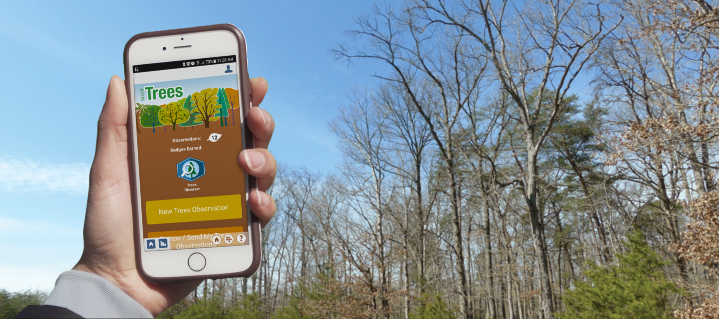 Hand holding a smartphone with the Trees tool on the screen
