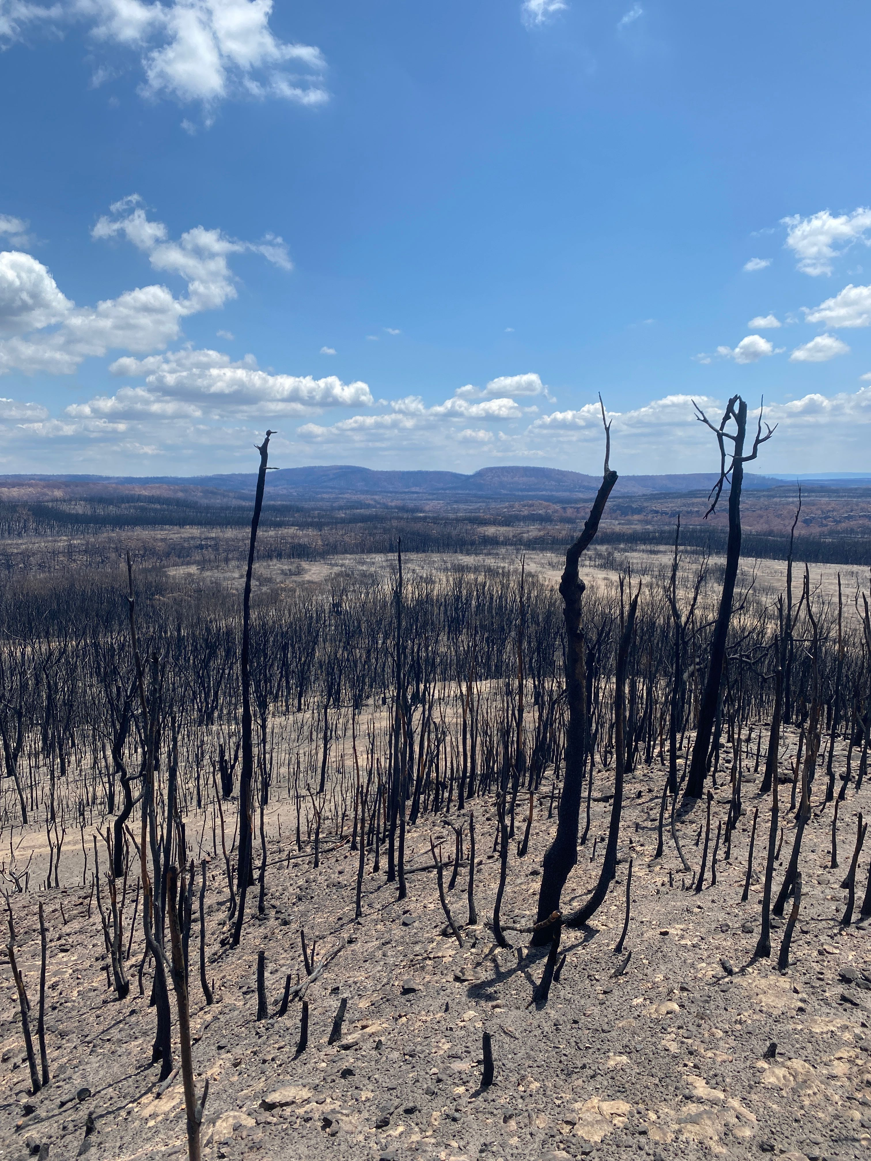 Image showing a landscape after a fire