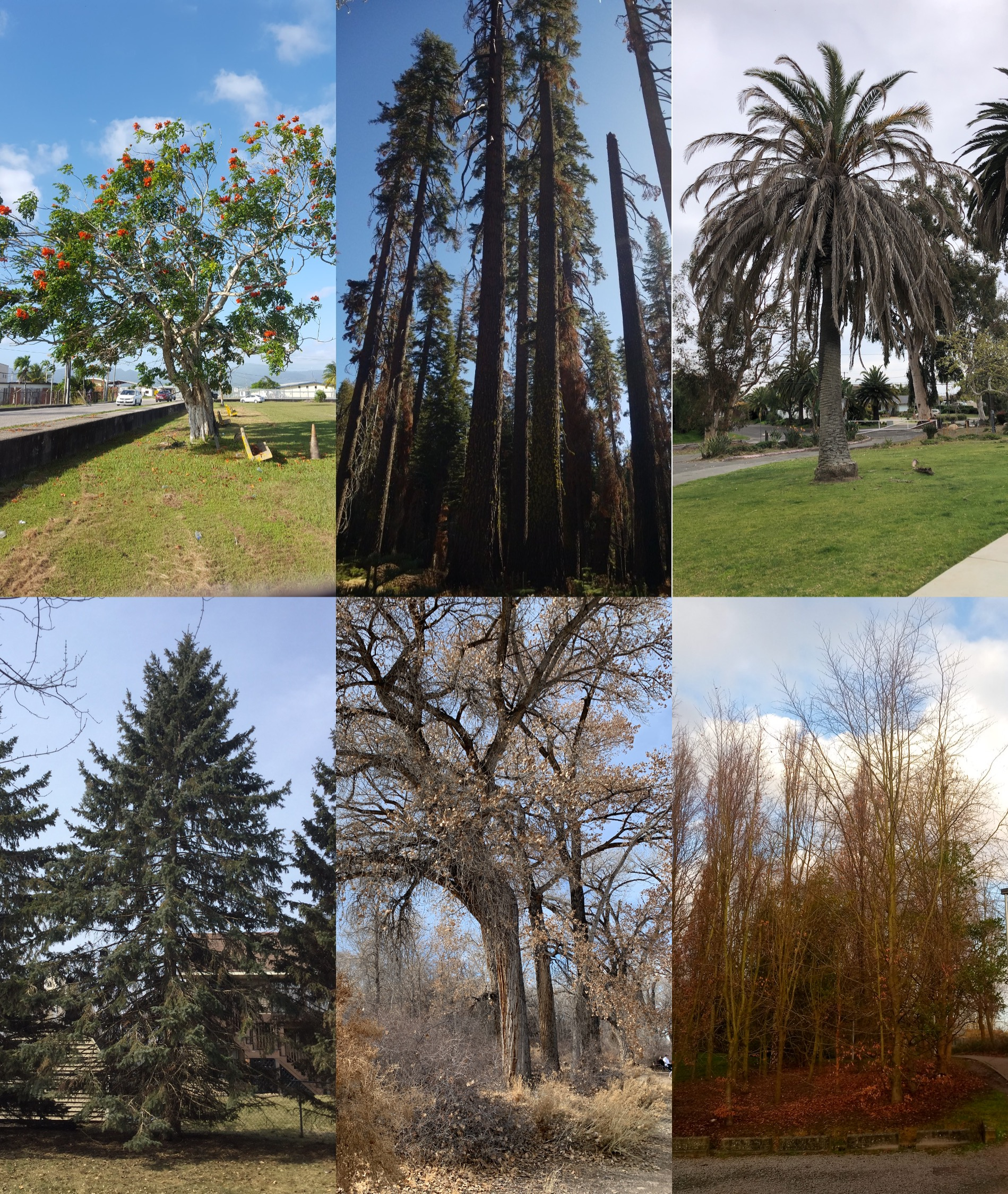 Examples of different types of trees