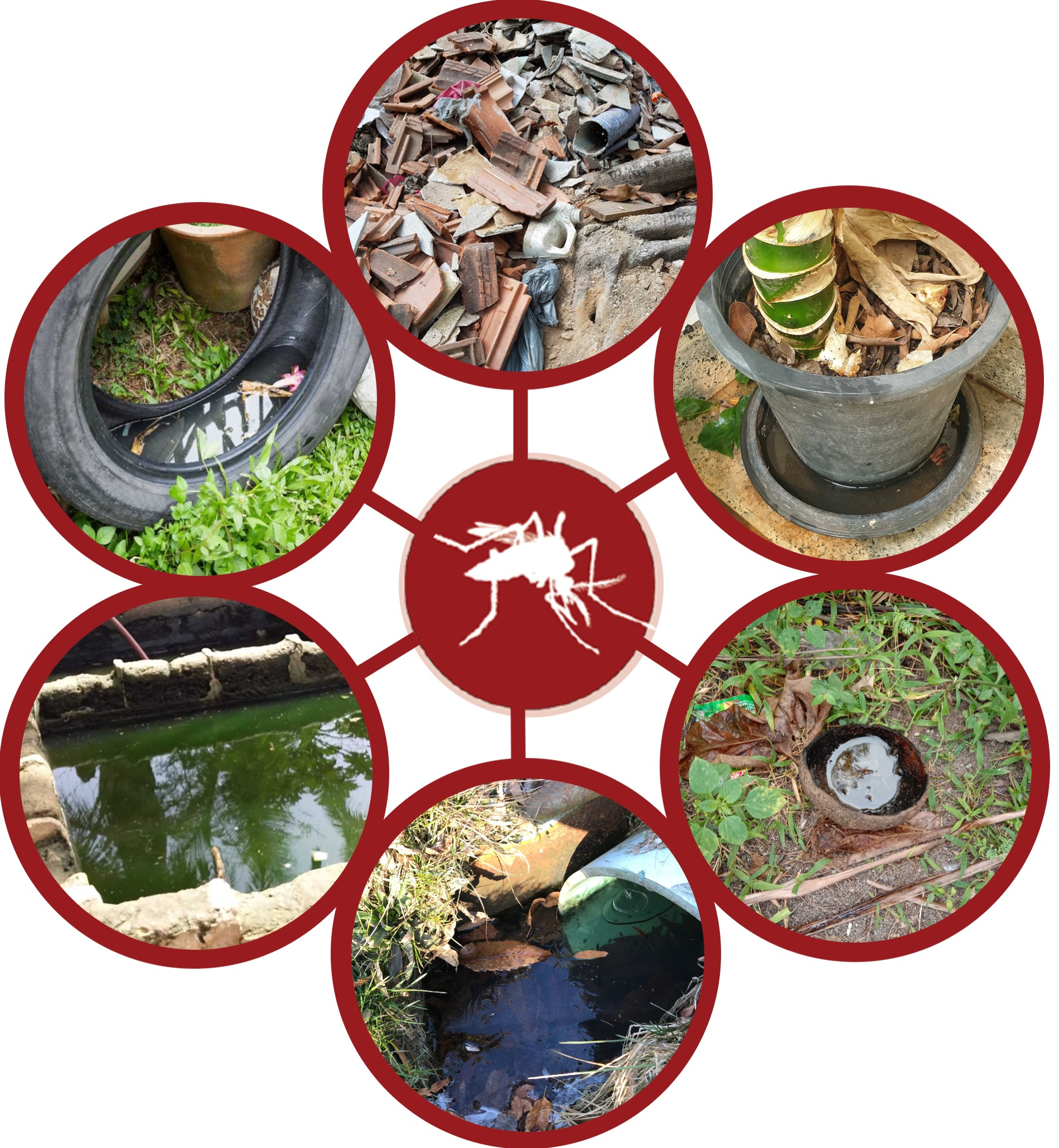 Examples of mosquito habitats reported by GLOBE Observers.